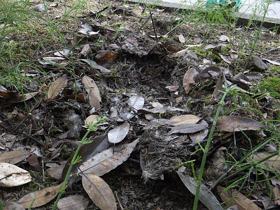 巣はあっという間に残骸と化した.