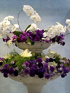 胡蝶蘭と組み合わせて奇麗に飾られていました.