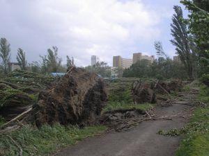 倒壊したポプラ並木