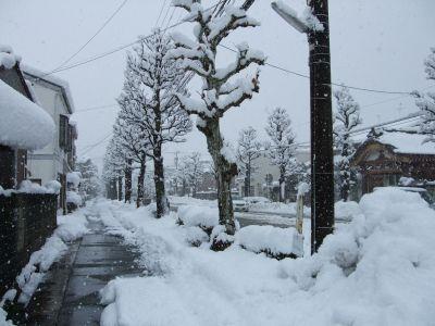 道路といい家といい街路樹といい雪まみれです.